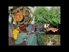 Medicinal Rice P5N Formulations for Hura Excess: Pankaj Oudhia's Medicin...