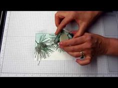 Ornamental Pine in the Snow at Christmas with a How To Video!, Gorgeous Grunge, Handmade Christmas Card, Kay Kalthoff is Stamping to Share with Stampin' up!