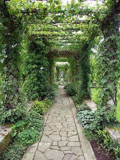 Vine covered pergola path.