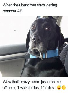 Hilarious Uber Animal Memes - Lovely Animals World Cute Dog Memes, Cute Animals With Funny Captions, Funny Animal Memes, Funny Animal Pictures, Cute Baby Animals, Funny Dogs, Cute Dogs, Funny Animals, Funny Memes