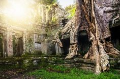 Ta Prohm Temple, Cambodia // PHOTO: Nicole S Young