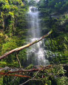 Sometimes you just come across these places made of magic  Which reminds me.  Falls festival is just around the corner . #Lorne #erskine #falls #explore #waterfalls #escape #shower #australia #adventure #vanlife #nature #travel #travelphotography #picoftheday #freedom #fresh #iphone #greatoceanroad #south #southaustralia #victoria by kylbishop