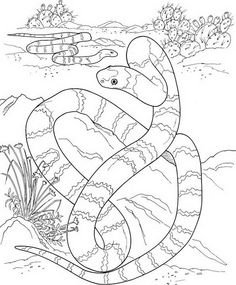 Amozon River Coloring Pages Snake from Printable Snake Coloring Pages. In this category, there are Snake Coloring Pictures to print. Snakes are commonly called the Scaled Reptiles belonging to the suborder Serpentes.