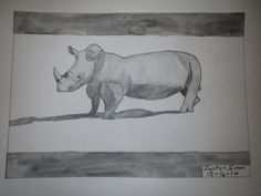 """Justyn's """"In Your Style"""" ~ Rhinoceros Challenge drawing"""