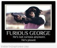 Whatever it is that had George curious made him furious. Haha Funny, Funny Cute, Funny Jokes, Funny Stuff, Funny Things, Random Stuff, Super Funny, Freaking Hilarious, Thoughts
