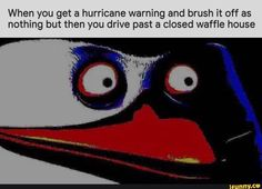 When you get a hurricane warning and brush it off as nothing but then you drive past a closed waffle house - iFunny :) Funny Car Memes, Stupid Funny Memes, Funny Relatable Memes, Dankest Memes, Funny Stuff, Funny Things, Random Stuff, Funny Images, Funny Pictures