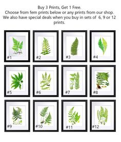 Spring Wall Decor Ferns Art Prints set of by GnosisPictureArchive