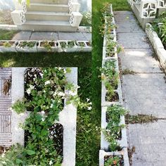 Europalette Bepflanzen ein toller blickfang für jeden balkon eine europalette als