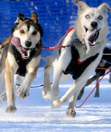 One of the best news sites for all things Iditarod