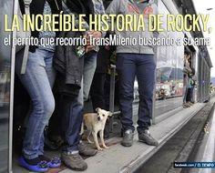 http://app.eltiempo.com/#bogota/perro-busca-a-su-duena-en-transmilenio/14491403