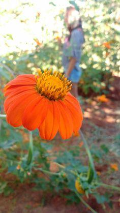 flower, orange, Santo Antônio de Posse - SP