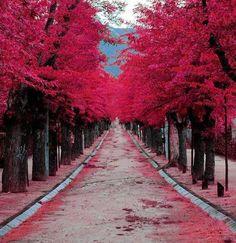 Alley Lovers _ Spain