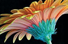 New Wallpaper @ Flavor Paper : Tasty Handscreened and Digital Wallcoverings