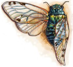 Cicada... Mock up for the tattoo Cicada Tattoo, Bug Tattoo, Insect Tattoo, Art Sketches, Art Drawings, 7th Grade Art, Insect Photography, Bee Art, Insect Art