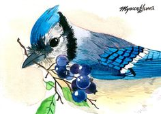 ACEO Limited Edition 6/25- Tyndall Blue, Bird art print of an original watercolor painted by Anna Lee, Gift idea for bird lovers, Bluejay