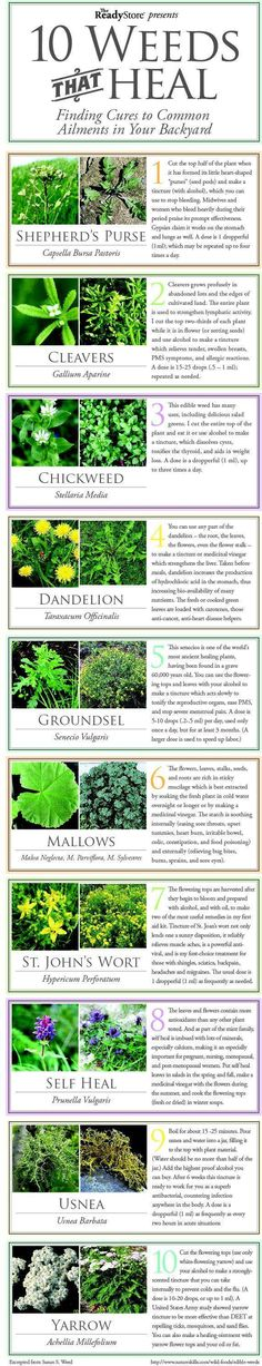 Top 10 Weeds That Heal - INFOGRAPHIC - Shepherd's Purse, Cleavers, Chickweed, Dandelion, Groundsel, Mallows, St. John's Wart, Self Heal, Usnea, Yarrow.