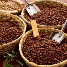 Resultados de la Búsqueda de imágenes de Google de http://www.cabucoffee.com/newimages/variedades-de-cafe.jpg