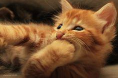 I love cats :-) Especially cute ones!