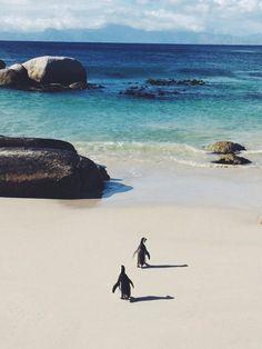 Pingouins sur une plage de Cape Town