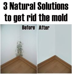 3 Natural Solutions to get rid the mold