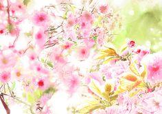 #SAKURA 2 #watercolor_flowers #OHGUSHI #水彩 #particles_粒子 #桜