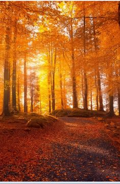Autumn Photography, Landscape Photography, Macro Photography, Beautiful World, Beautiful Places, Beautiful Pictures, Autumn Scenery, Tree Forest, Fall Pictures
