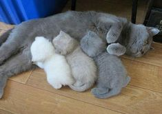 One happy feline family of a mother cat and her three baby kittens enjoying a peaceful moment together...