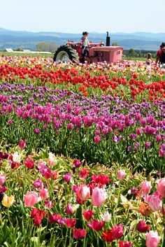 Wooden Shoe Tulip Festival, Woodburn OR.