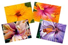Hibiscus Series notecards on Etsy, $16.00