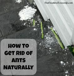 One Creative Housewife: How to Get Rid of Ants Naturally