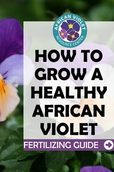 If you want your African Violet plants to thrive, you definitely need to be giving your plant the best fertilizer. Learn more about the best African Violet Plant Food to use on your plant to help it grow and bloom all year long.