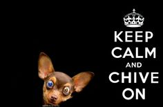 Chiuahua - Keep Calm and Chive on ( #kcco )