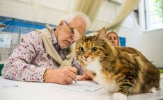 Micah on cat show Bobtail Cat, Cattery, Cats, Gatos, Cat, Kitty, Kitty Cats