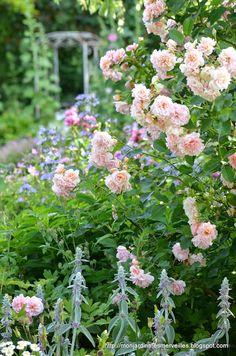 Mon Jardin Mes Merveilles: One shot : La douceur de Félicia