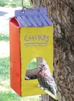 Click here for a #DIY bird feeder made from a milk carton!