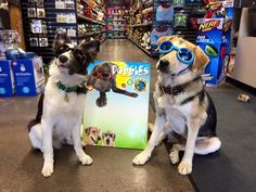 Doggles are one of the best items for dogs who spend a lot of outdoors in the summer. Just remember to carry a portable water carrier filled with cool fresh water with you too! You'll find Doggles at a Global Pet Foods store near you; locate one using our Store Locator: http://www.globalpetfoods.com/store-locations
