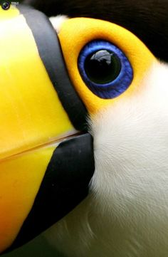 extreme close up of a toucans eye