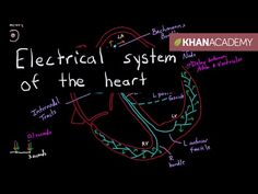 Electrical System of the Heart - YouTube