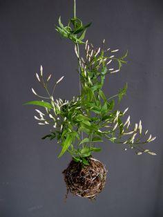 #kokedamas :  #plantas en una bola de musgo