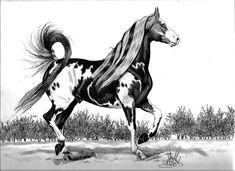 The Proud Pinto Saddlebred Stallion Drawing