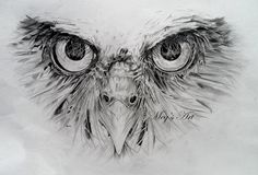 Owl Face pencil drawing (in progress) - Artwork by Megan Humphries.