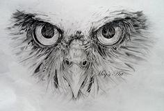 Owl Face pencil drawing (in progress) - Artwork by Megan Humphries.