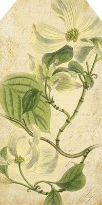 Lilac & Lavender: Lilac