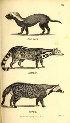 v.1:pt.1-2 (1800) - General zoology, or Systematic natural history, - Biodiversity Heritage Library