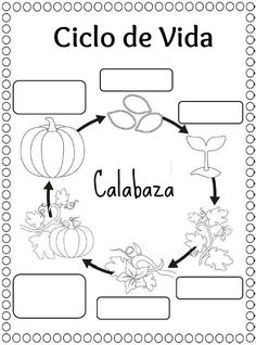 This page has a lot of free Life cycle craft and coloring page for kids,parents and preschool teachers. 1st Grade Science, Kindergarten Science, Science Classroom, Teaching Science, Science Fun, Life Cycle Craft, Pumpkin Life Cycle, Montessori Science, First Year Teachers