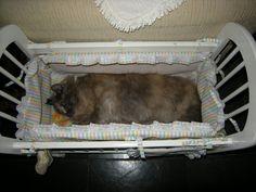 Mel dormindo no bercinho de boneca. Ela adora!!