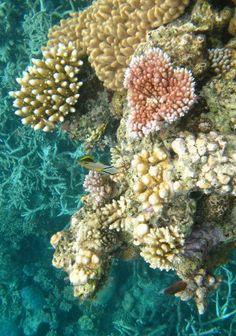 Great Barrier Reef - Port Douglas, Australia