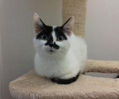 My new kitten - Jeeves http://ift.tt/2euIOiA