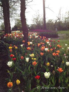Una distesa di tulipani nel parco