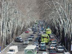 Les arbres de reza shah